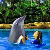 Discover Cove Dolphin Swim!