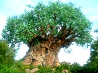 Walt Disney World's Animal Kingdom!